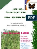 02 Insectos en Pino (2)