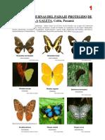 Mariposas Punta Galeta