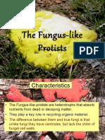 The Fungus-like Protists Web Version