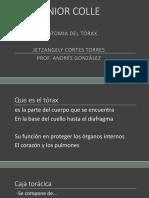 c userstorres03desktopanatomia del  torax  1