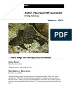 Pterygoplichthys Pardalis WEB 8-29-12