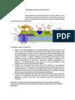 Membrana Celular y División Celular