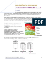 Plantas vasculares (Estructura secundaria del tallo