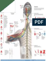 infografico-fibromialgia
