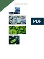 10 ejemplos de organismos unicelulares.docx