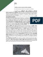 Guía betularia