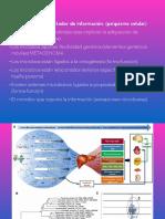bioenergetica niños.pdf