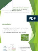 Diseño de Vías Metabólicas Eficientes en Plásmidos Transgénicos de Tabaco y Tomate Con Operones Multigénicos Sintéticos