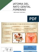 Anatomia Del Aparato Genital Femenino