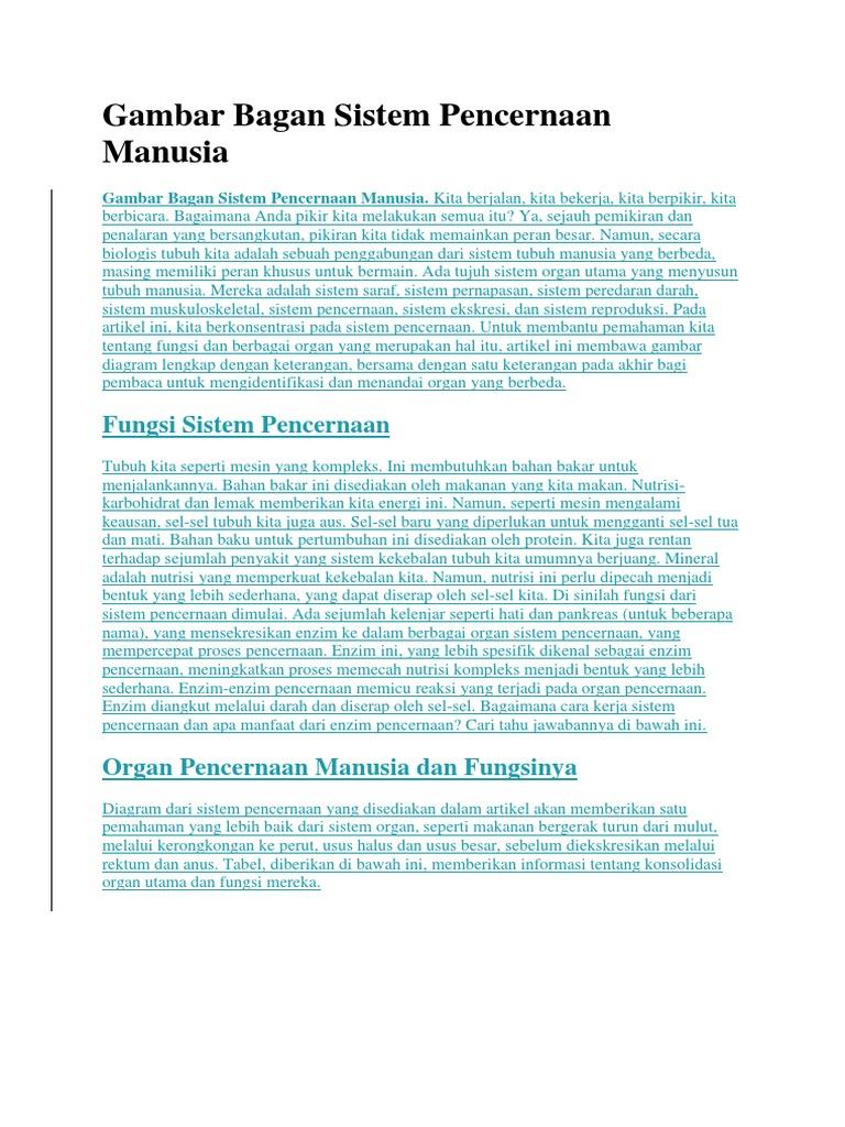 Gambar Bagan Sistem Pencernaan Manusia Docx