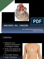 1. Anatomia y Fisiologia Cardiaca