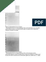 Gels (Print 1-Printed).docx