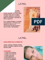 1fisiologiadelapiel-101222125618-phpapp01