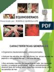 EQUINODERMOS_153