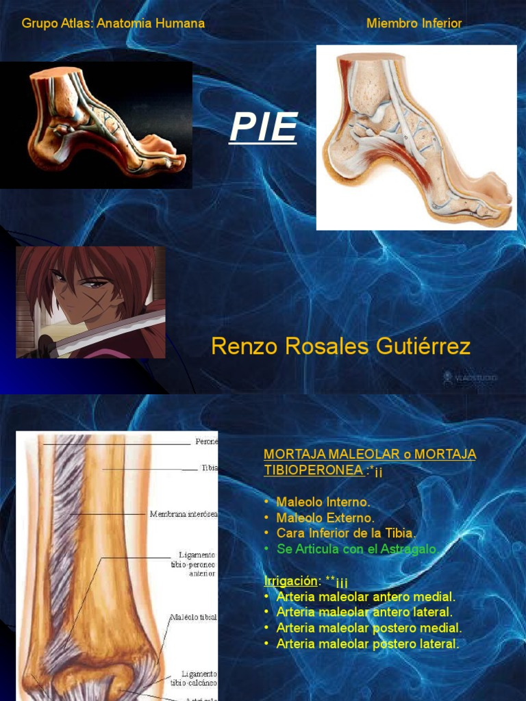 Anatomia Grupo Atlas Clase 5 Pie