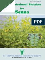 Aungusta Latifolia (Senna) farming