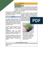 Importancia de las plantas para todos los seres vivos  Biologia.docx