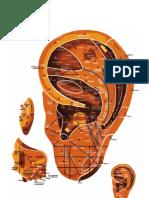 Mapa Auricular Escola Huang Li Chun (atualizado)-2.pdf