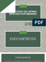 patologias del sistema reproductor femenino leylanie