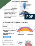 DESARROLLO PRIMITIVO DEL CORAZÓN Y FORMACIÓN DE LOS PULMONES