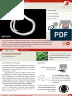 001-lombriz-intestinal.pdf