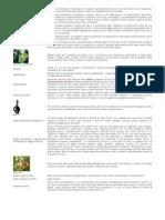Enciclopedia del Vino.pdf