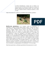 Plantas Del Proyecto de Cirila