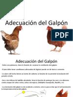 GALPÓN DE GALLINAS PONEDORAS