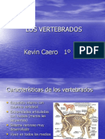 vertebrados(1)