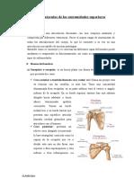 Huesos y Músculos de Las Extremidades Superiores