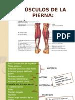 msculosdelapierna-121108200903-phpapp02.pptx
