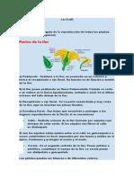 LA FLOR.docx