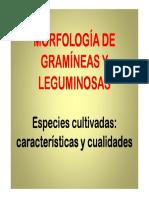 187451236.Gram y Legum.pdf
