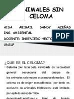 316378000 Presentacion Animales Sin Celoma
