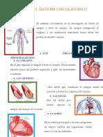 Qué Es El Sistema Circulatorio
