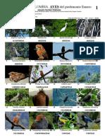 769 Colombia Aves Del Piedemonte Llanero