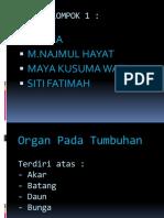 Persentase Organ Pada Tumbuhan, Kelompok 1