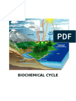 Biochemical Cycle