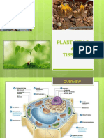 MF009 2B Plant Cells Tissues James L2(2)
