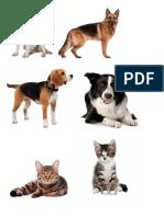 p Activ de Clasificacion Mascotas
