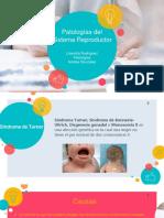 patologias del sistema reproductor