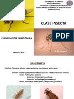 Clase Insecta. Clasificación Taxonómica