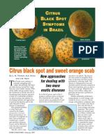 citrus black spot.pdf