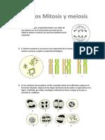 Respuestas Mitosis Meiosis1