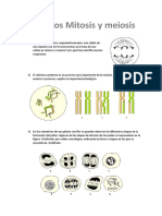 respuestas mitosis meiosis1.docx