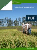 Descripción de variedades de arroz.pdf