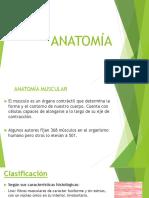 Anatomia Completoeq 2