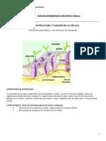 Clase 3 Guia de membrana celular  y transporte 8°
