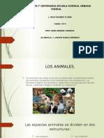 Presentación de los animales