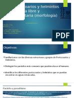 Exposicion1_ Protozoarios y Helmintos.2